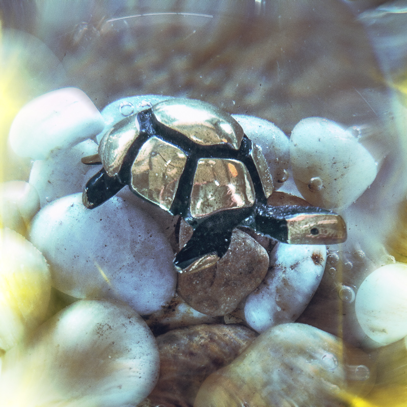 Walter Bosse turtle underwater