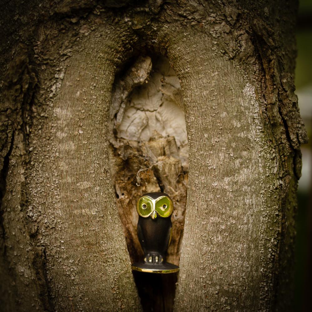 Walter Bosse owl in a tree